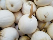 Pompoenflard, Landbouwersmarkt, Oktober, Daling stock foto