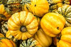 Pompoenoogst in de herfst Stock Afbeelding