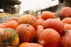 Pompoentribune op de markt van een landbouwer Royalty-vrije Stock Fotografie