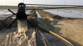 Pompować wodę przygotowywać ryżowego teren zbiory wideo