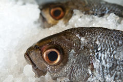 Pomresh-Fische Stockfoto