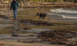 Pomyślny odzyskuje wielki kij od morza obrazy stock
