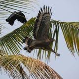Pomyślny ptak Obraz Royalty Free