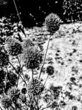 Pomysłowo kwiaty w czarny i biały fotografia royalty free