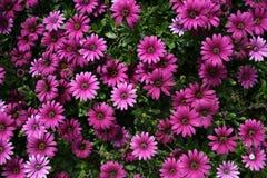 ponad kwiaty Zdjęcie Royalty Free