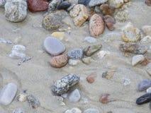 ponadto być sfotografowana w kamyczek morska woda z alg Obraz Stock