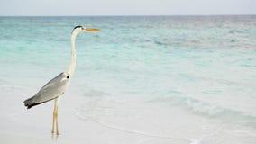 Poncez la plage et le ressac, atoll masculin du sud clips vidéos