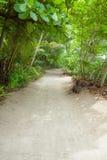 Poncez la route à la plage dans la forêt tropicale Photo stock
