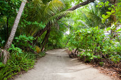 Poncez la route à la plage dans la forêt tropicale Photographie stock libre de droits