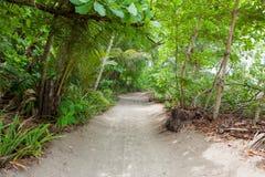 Poncez la route à la plage dans la forêt tropicale Image libre de droits