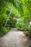 Poncez la route à la plage dans la forêt tropicale Images libres de droits