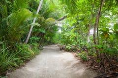 Poncez la route à la plage dans la forêt tropicale Photo libre de droits