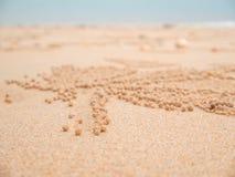 Poncez les crabes de barboteur sur le bord de la mer de sable en nature Maison de Ghost c Photos stock