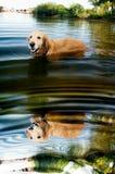 Poncho en agua Imagen de archivo libre de regalías