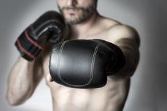 Poncz bokser Zdjęcie Royalty Free
