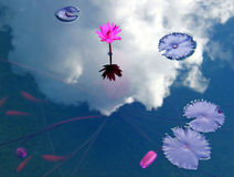 Pond. Flowering of a lotus on a pond with fishes Royalty Free Stock Photo