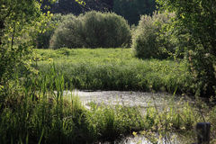 Pond Stock Photo