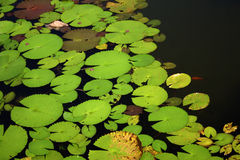 Pond Stock Image