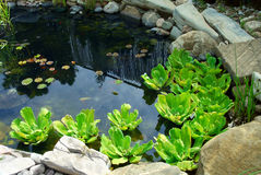 Pond Stock Photography