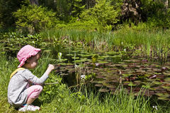 Pond. Little girl exploration in a natural pond environment Stock Images