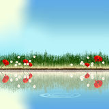 Pond. A pond reflecting poppies and daisies (vector Stock Photography