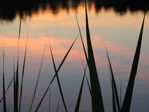 Pond. Calm pond surface and grass on the foreground Royalty Free Stock Image