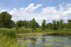 Pond With Algae on a Breezy Day Stock Images