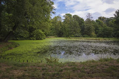Pond with algae Royalty Free Stock Image