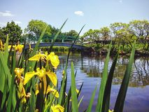 Free Pond And Bridge Stock Photos - 92432533