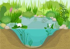 Pond. Andscape with pond and water lily Stock Image