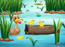 A pond with animals Royalty Free Stock Image