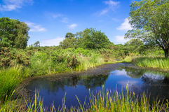 Pond at Arne in the Dorset Countryside. Pond and Grassland at Arne in the Dorset Countryside, United Kingdom Stock Photos