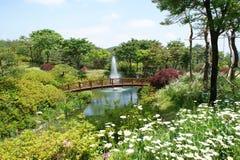 pond around flower stock photos
