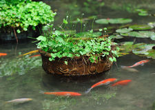 Pond in asian garden Royalty Free Stock Photos