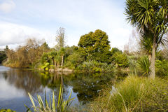 Pond at Auckland Botanical Garden. Auckland Botanical Gardens lagoon surrounded by trees Royalty Free Stock Photos