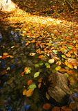 Pond in autumn Stock Photo