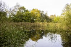 Pond in autumn colored forest stock photo
