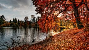 Pond with autumn leaves