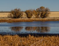 Pond in autumn in Oregon. A pond in the Malheur National Wildlife Refuge in the high desert of eastern Oregon in autumn Royalty Free Stock Images