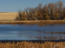 Pond in autumn in Oregon. A pond in the Malheur National Wildlife Refuge in the high desert of eastern Oregon in autumn Stock Photography
