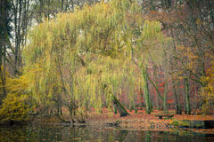Pond in the autumn park. Germany Stock Photos