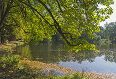 Pond in the autumn park Royalty Free Stock Images