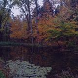 Pond in autumn royalty free stock image