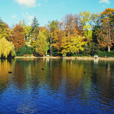 Pond and autumn trees Royalty Free Stock Image