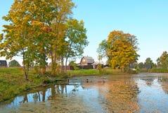 Pond in the autumn village Stock Photo