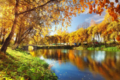 Pond in autumn, yellow leaves, reflection Stock Image