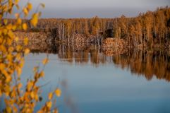 Pond on the background of autumn forest Stock Images