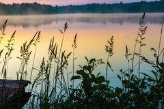 Pond bank in morning sunrise illumination with mist. Pond bank in early morning sunrise illumination with mist, moody image royalty free stock photo