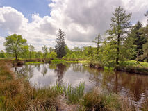 Pond Royalty Free Stock Photography