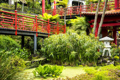 Pond in a Beautiful Garden at Monte above Funchal Madeira. This wonderful garden is at the top of the cablecar from the seafront in Funchal. It is filled with Royalty Free Stock Photo